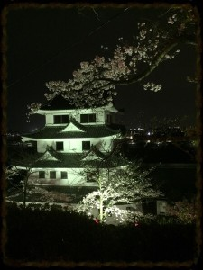 尾張旭市 城山公園の夜桜