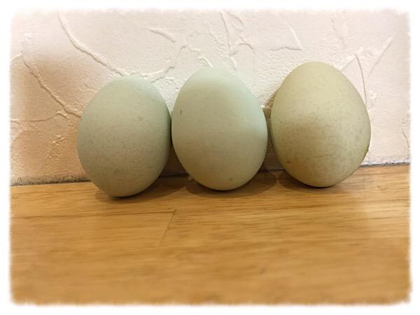 青い卵!?(゚Д゚;)