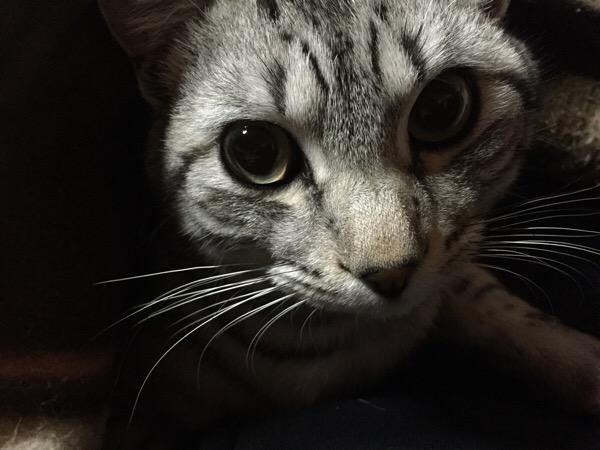 ニャンにゃんニャンでネコの日🐱