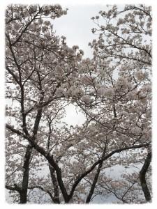 春のイメチェンヘア✨