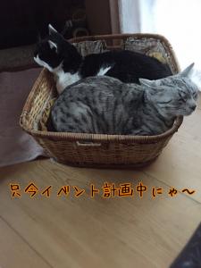 untreeイベント計画中( *´艸`)