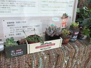 多肉植物|尾張旭市の美容室・美容院アンツリー
